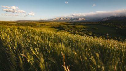 A grasslands landscape.